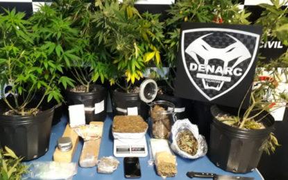 Polícia Civil do Tocantins prende estudante que cultivava e comercializava supermaconha